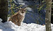 Nationalpark Bayerischer Wald Tierfreigehege