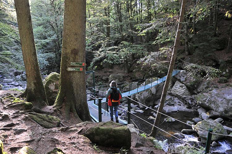 Wandern In Ringelai Wandern Im Bayerischen Wald Wandern